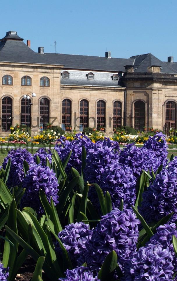 Die Gothaer Orangerie erfreut mit ihrer Farbenpracht viele Besucher und Gäste der Residenzstadt Gotha