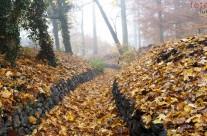 Der Leinakanal unter einem dichten Blätterteppich