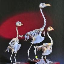 """""""Die Gestalt der Taube"""""""
