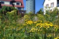Mit seinen 916 Meter über dem Meeresspiegel ist der gr. Inselsberg nicht nur der höchste Berg im Landkreis Gotha, hier können aufmerksame Wandereraugen auch die Flora und Fauna des Rennsteigs bestaunen