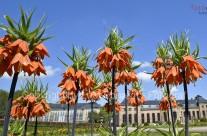 Gothaer Orangerie….