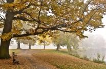 Gothaer Stadtpark im Nebel