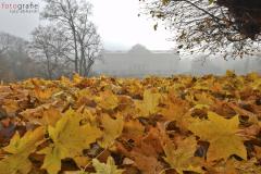 Das Herzogliche Museum im herbstlichen Nebegewand