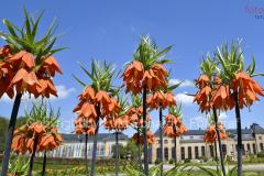 Blütenpracht in Gothas Orangerie