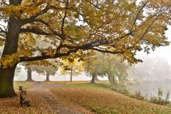 Gothaer Stadtpark im Herbstnebel