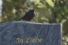 der Gothaer Hauptfriedhof- für Tiere das Paradies auf Erden